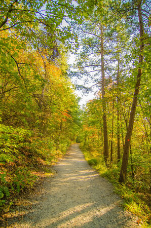 Beautiful autumn forest mountain path at sunset photo