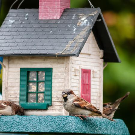 housewarming: bird feeders. tree house for the birds, cheerful apartmen Stock Photo