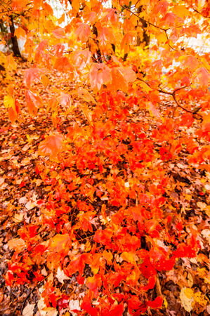 fullness: autumn colors within southern city limits in late november Stock Photo