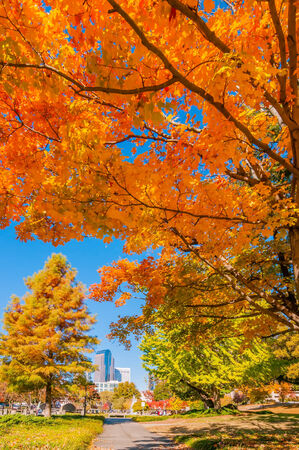 charlotte city skyline autumn season with blue sky Editorial