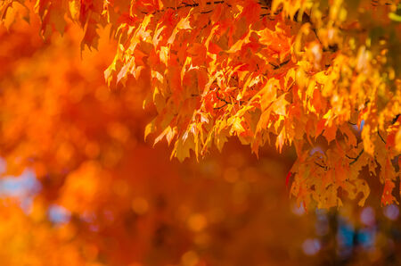 within: autumn colors within southern city limits in late november Stock Photo