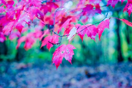 fullness: autumn season colors at neightborhood park