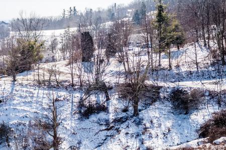 hardwoods: blue ridge parkway winter scenes in february