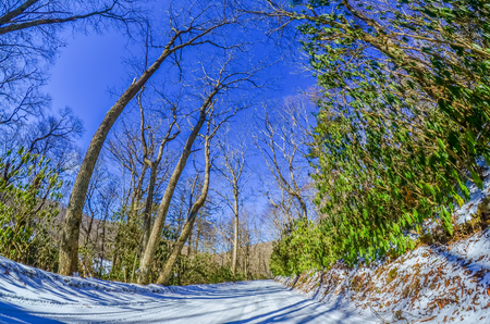 snow covered road leads through the wooded forest