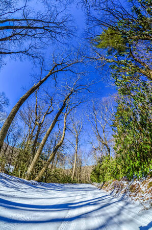 snow covered road leads through the wooded forest photo