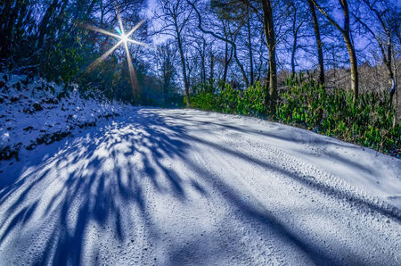 treeline: snow covered road leads through the wooded forest