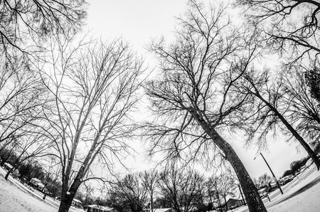 looking at tree tops after a winter snow storm photo