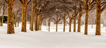 snow covered sidewalk alley with trees in winter