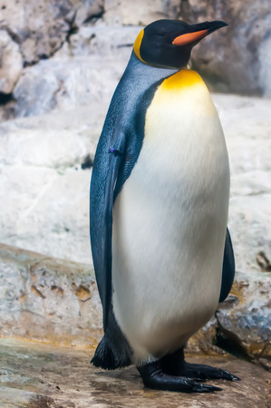 penguin portrait photo