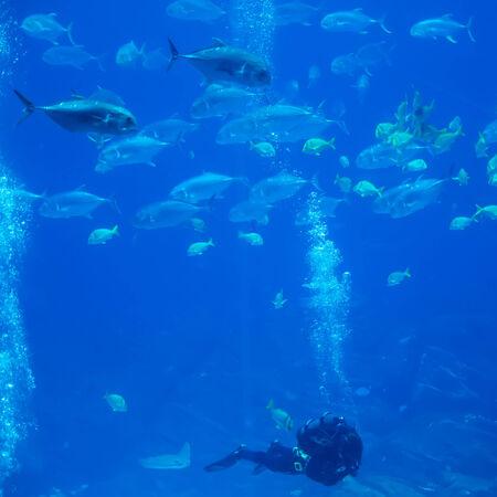 scuba diver with fish in ocean