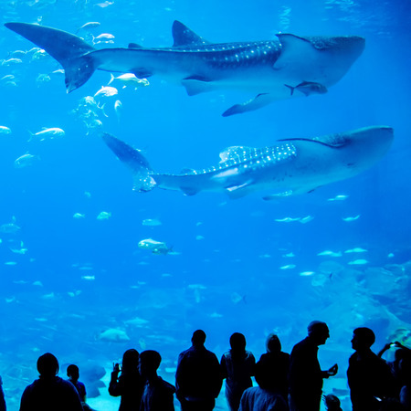 whale sharks swimming in aquarium with people observing Stock Photo