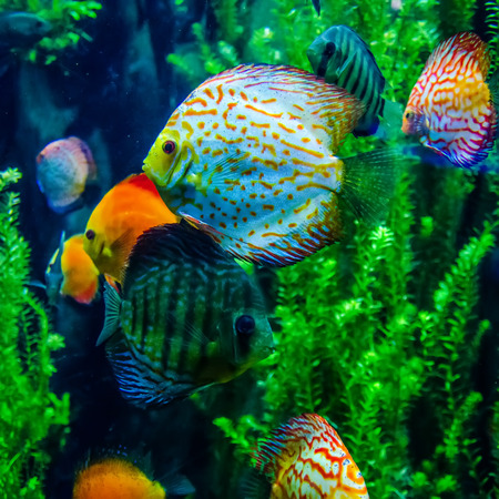 salt water fish in the ocean or aquarium photo