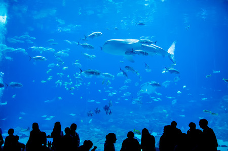 whale sharks swimming in aquarium with people observing 版權商用圖片 - 27756191