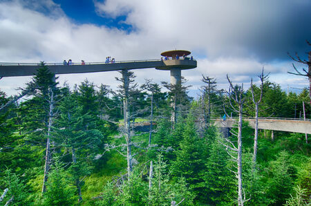 great smoky national park: Clingmans Dome - Great Smoky Mountains National Park
