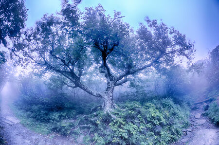 craggy: Craggy Gardens North Carolina Blue Ridge Parkway Autumn NC scenic landscape photography featuring foggy conditions  Stock Photo