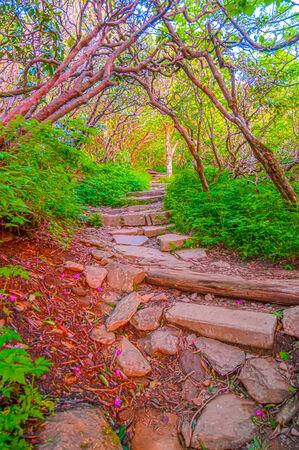 craggy: Craggy Garden Trail on an autumn day