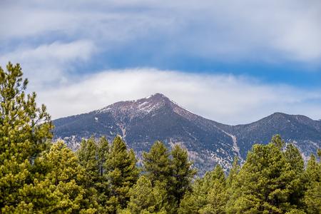 ponderosa pine winter: landscape with Humphreys Peak Tallest in Arizona