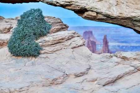 mesa: vegetation at famous Mesa Arch in Canyonlands National Park Utah  USA Stock Photo