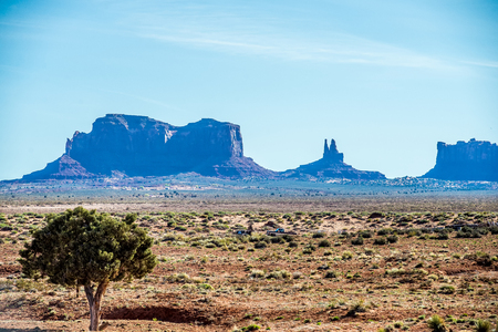 butte: A tree and a butte in Monument Valley