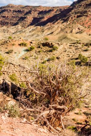 moab: Arches National Park  Moab  Utah  USA