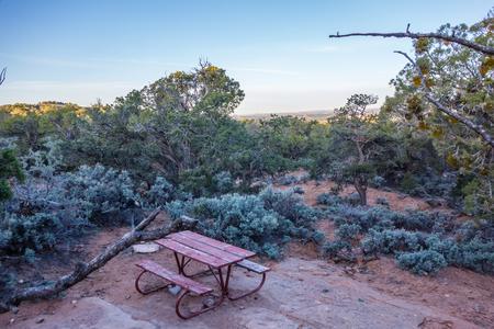 gnarled: Un antiguo enebro nudoso cerca de Navajo Monumento parque utah Foto de archivo
