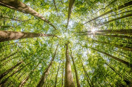 forêt de cyprès et marais du Parc national de Congaree en Caroline du Sud Banque d'images