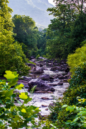 blurr: broad river flowing through wooded forest