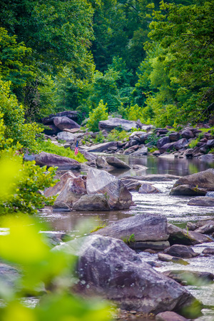wooded: broad river flowing through wooded forest