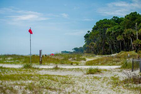 palmetto: palmetto forest on hunting island beach