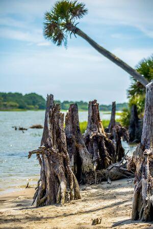 south carolina: nature scenes around hunting island south carolina