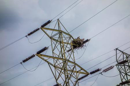 osprey nest on power lines Imagens
