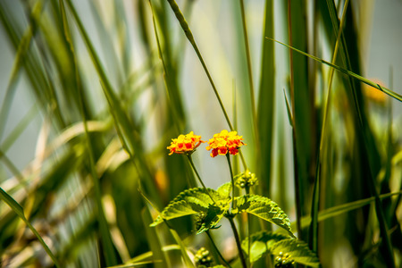 pokers: young orange and green plants by lake