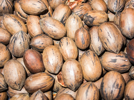 hickory nuts: closeup on pecan nuts stacked in a pile