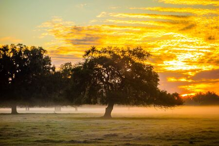 florida landscape: abstract sunrise landscape on the farm in florida Stock Photo
