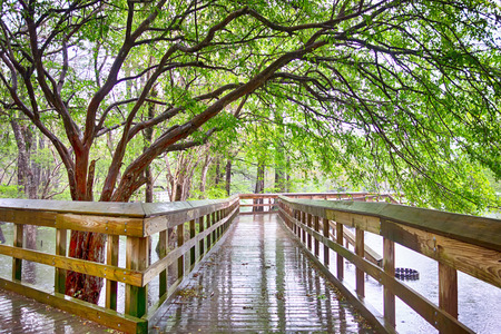 morrison: public park at morrison springs florida Stock Photo