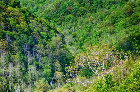 wnc: springtime in the blue ridge mountains