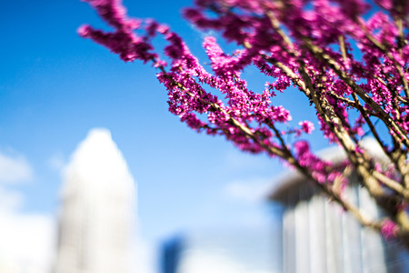 spring blossoming plant and flower in charlotte north carolina Stock Photo