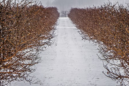 michigan snow: roadside trees and farms in michigan during winter