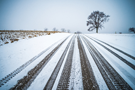 tree on a road during winter season