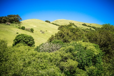 silicio: green california hills and mountains in spring