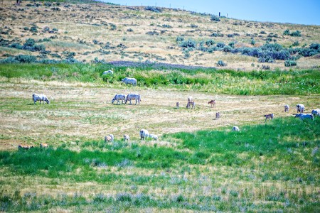 Eastern Washington state Landscapes and pastures on sunny day