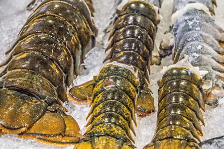 fish vendor: Lobster tails for sale at Pike Place Market in Seattle