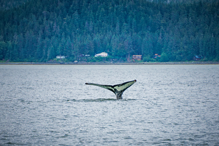 cetacea: whale watching on favorite channel alaska Stock Photo