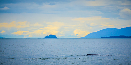 whale watching on favorite channel alaska Stock Photo