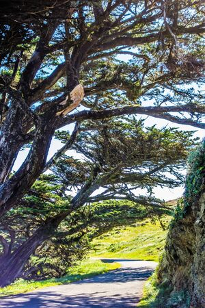 Point reyes national seashore landscapes in california 免版税图像