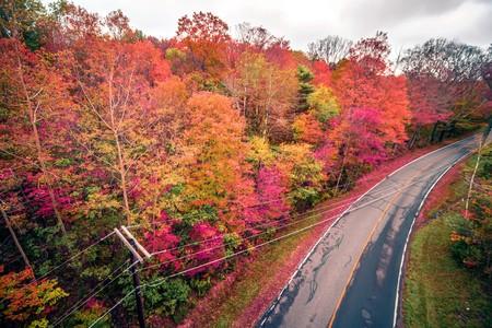 autumn season and color changing leaves season