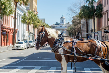 historic charleston south carolina downtown scenery Stock Photo
