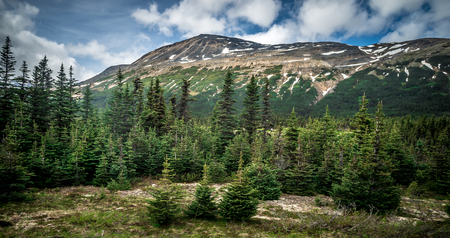 rugged and extreme terrain around fraser british columbia and white pass landscapes 免版税图像