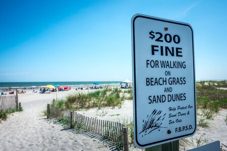 grassy windy sand dunes on the beach