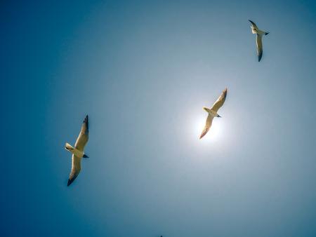 seagulls flying in the sunny sky Stockfoto
